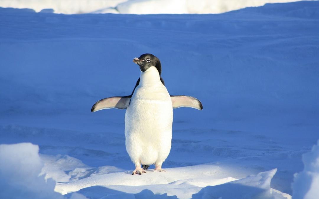 Pingwin 4.0 nie taki straszny?